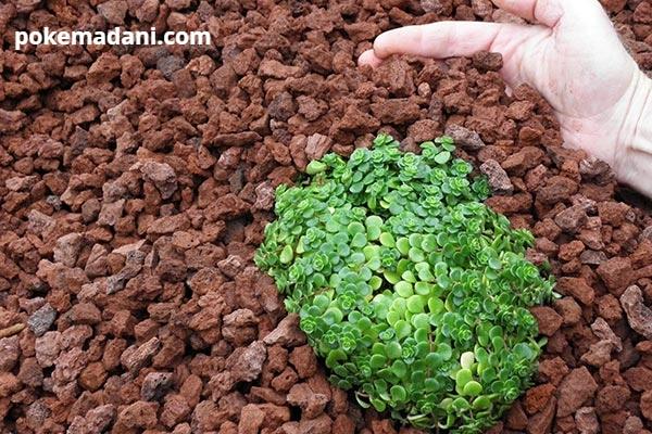 کاربرد پوکه معدنی در کشاورزی